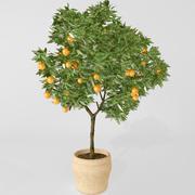 Portakal ağacı 3d model