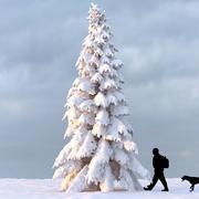 Albero d'inverno 11 3d model