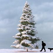 Winter Tree 08 3d model