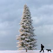 Winter Tree 06 3d model