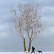 Albero d'inverno 05 3d model