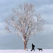 Albero d'inverno 04 3d model