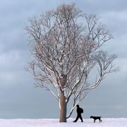 Albero d'inverno 03 3d model