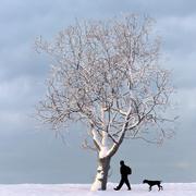 Albero d'inverno 01 3d model