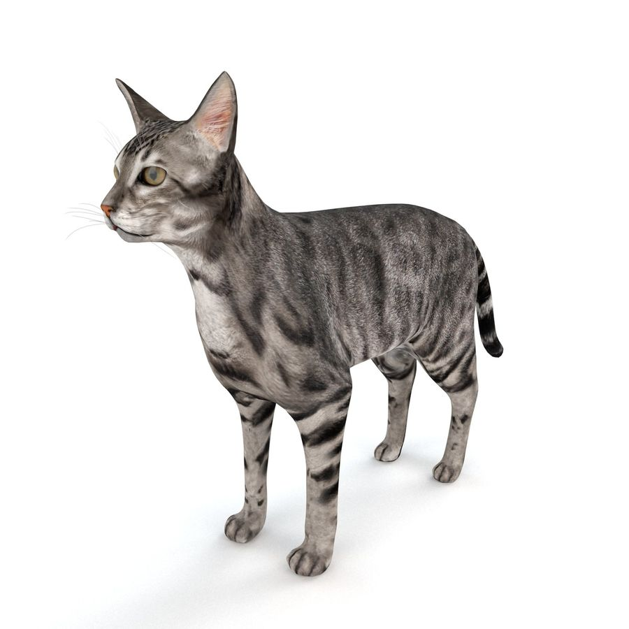 Cat royalty-free 3d model - Preview no. 3