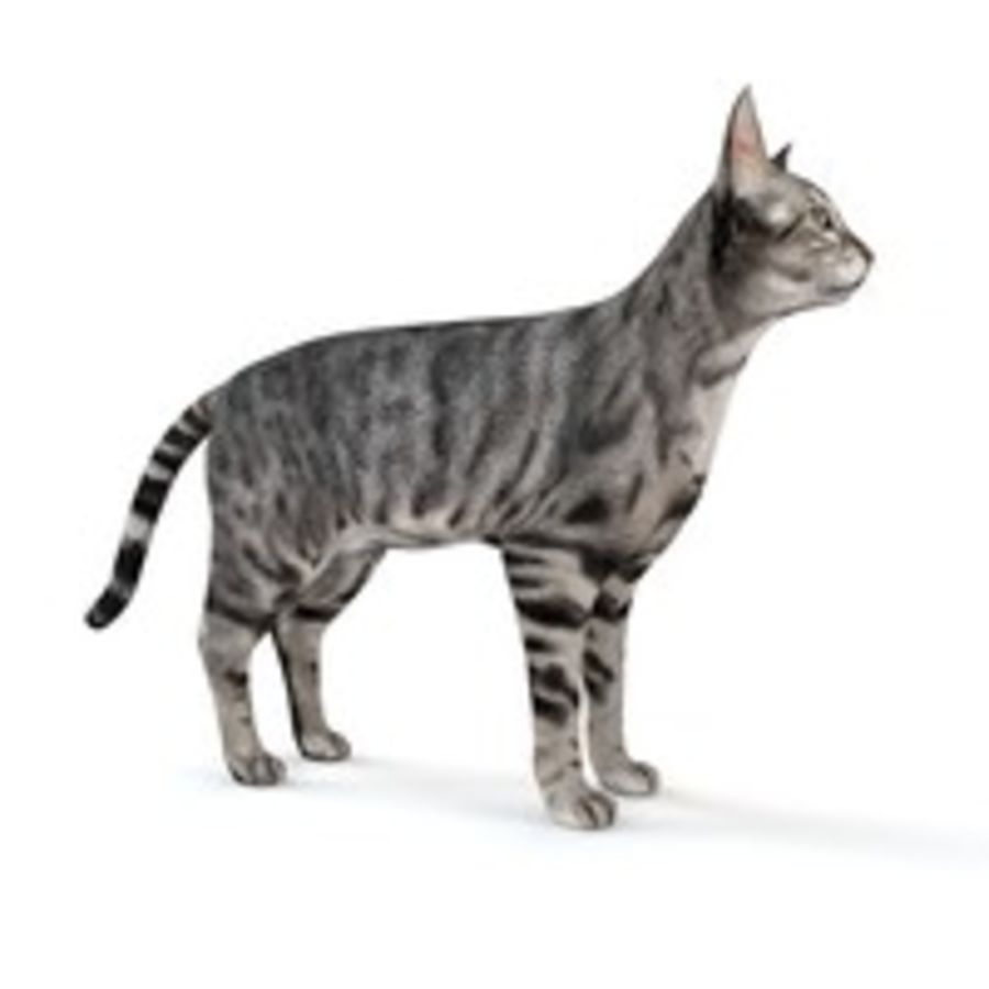 Cat royalty-free 3d model - Preview no. 5