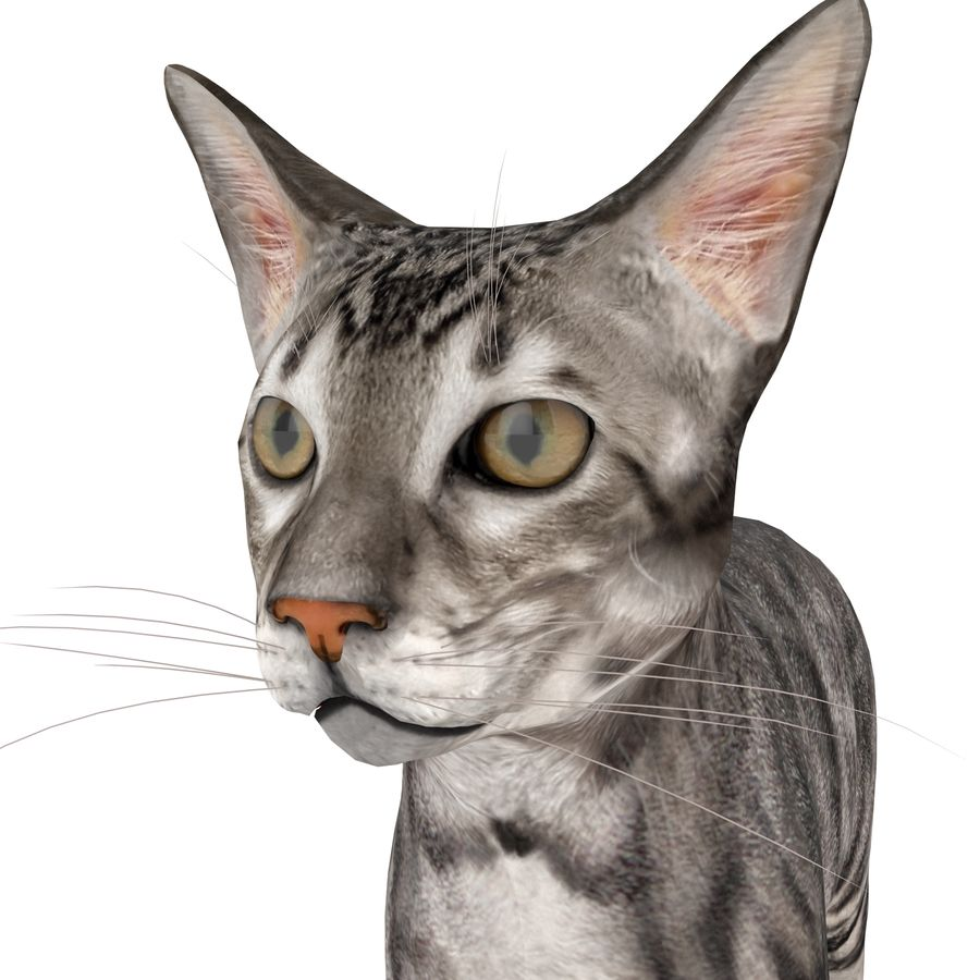 Cat royalty-free 3d model - Preview no. 11