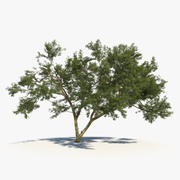 African Tree 01 3d model
