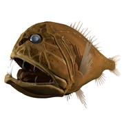 abyssal fish fangtooth 3d model