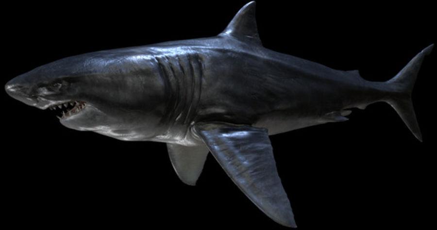 Grande squalo bianco royalty-free 3d model - Preview no. 17