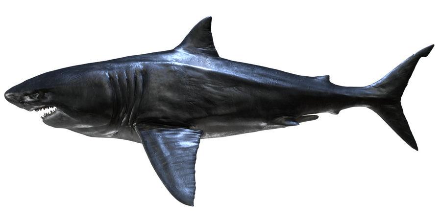 Grande squalo bianco royalty-free 3d model - Preview no. 18