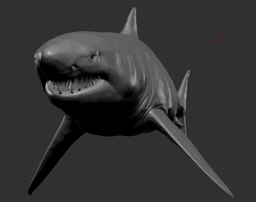 Grande squalo bianco royalty-free 3d model - Preview no. 4