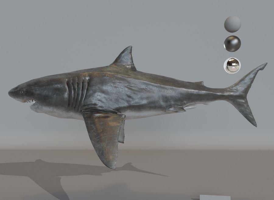 Grande squalo bianco royalty-free 3d model - Preview no. 2