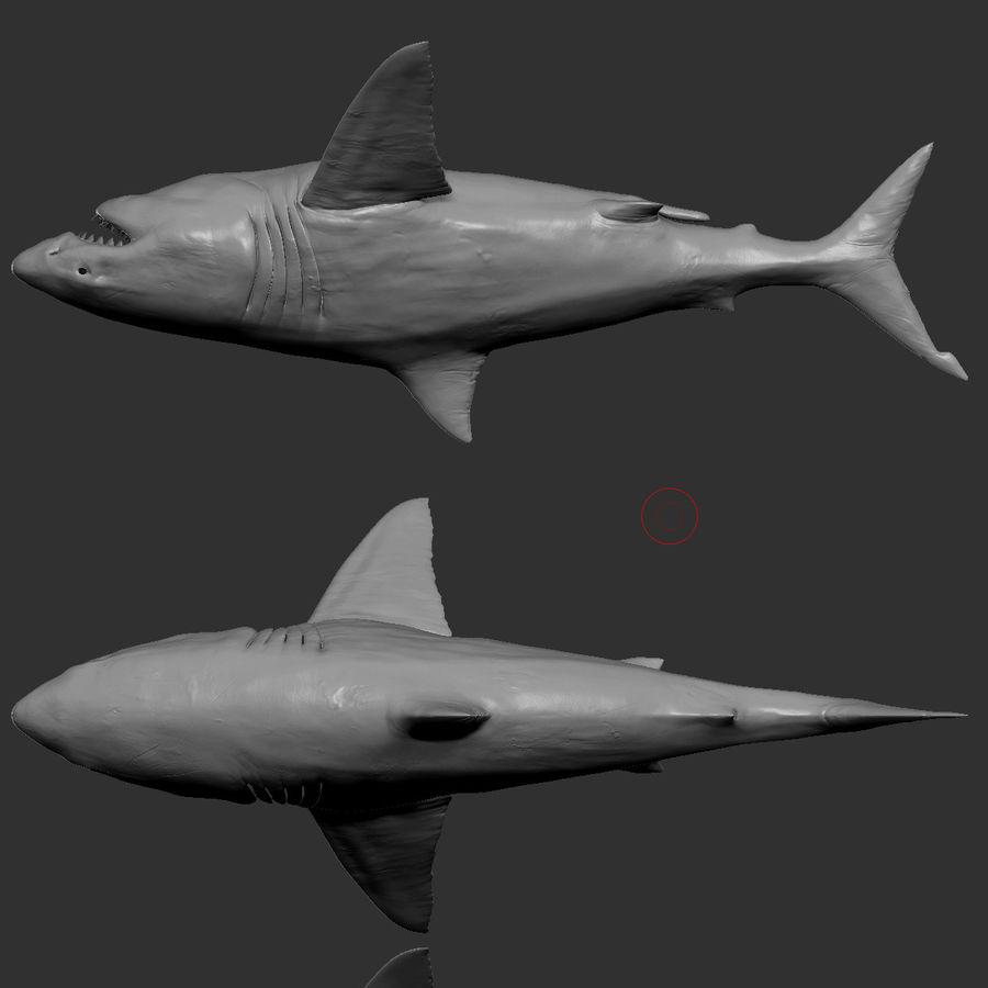 Grande squalo bianco royalty-free 3d model - Preview no. 15