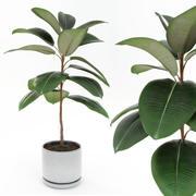 Ficus elastica decora small 3d model