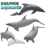 海豚动画 3d model