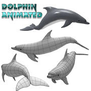 Dolphin Animated 3d model
