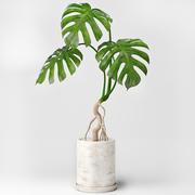 龟背竹 3d model