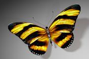 Vlinder 3d model