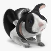 Modello 3D di Black Rabbit Pose 4 3d model