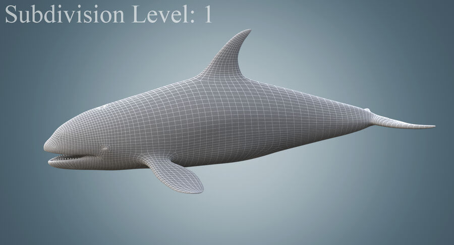 Killer Whale royalty-free 3d model - Preview no. 11