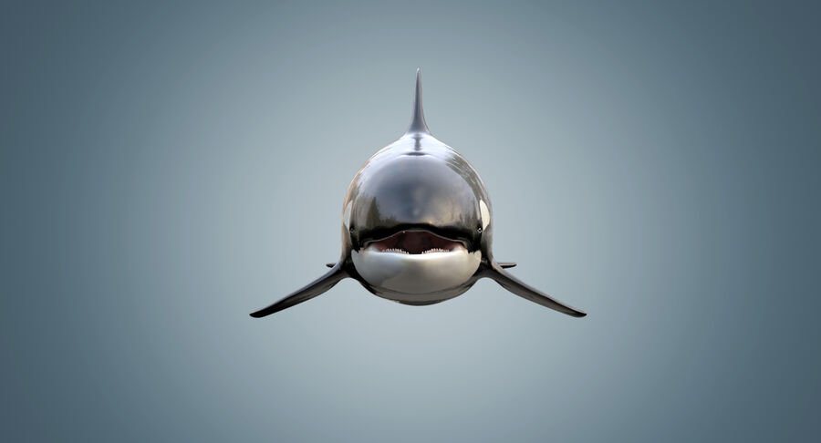 Killer Whale royalty-free 3d model - Preview no. 6