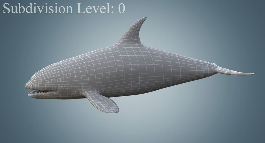 Killer Whale royalty-free 3d model - Preview no. 10