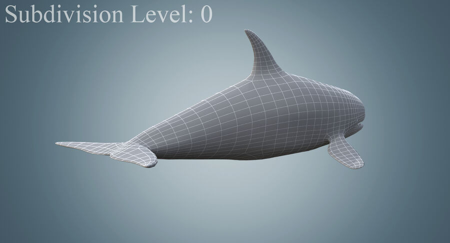 Killer Whale royalty-free 3d model - Preview no. 12