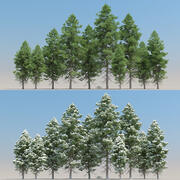 10 + 10 Pinus Cembra 나무 3d model