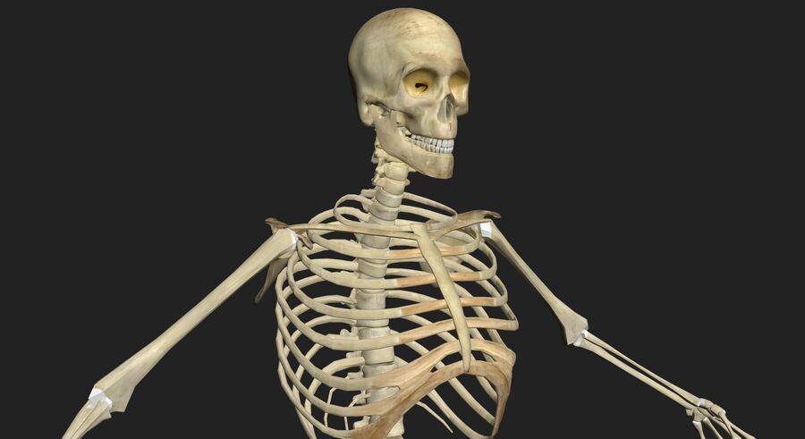 Man med skelett 3DSmax royalty-free 3d model - Preview no. 4