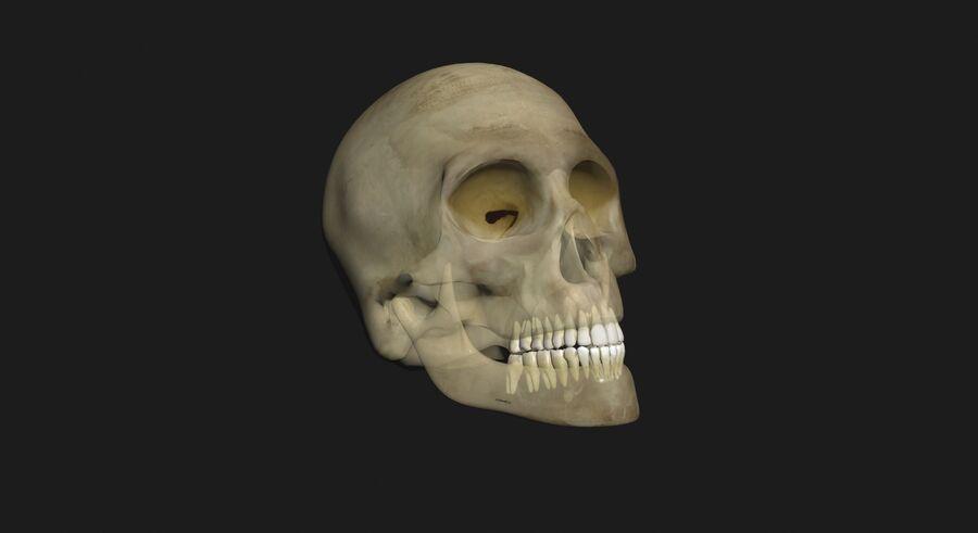 Man med skelett 3DSmax royalty-free 3d model - Preview no. 13