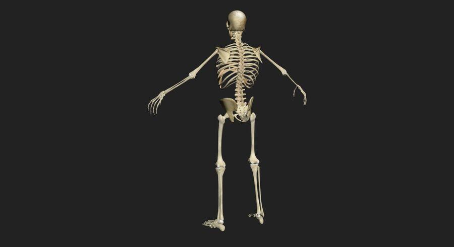 Man med skelett 3DSmax royalty-free 3d model - Preview no. 6
