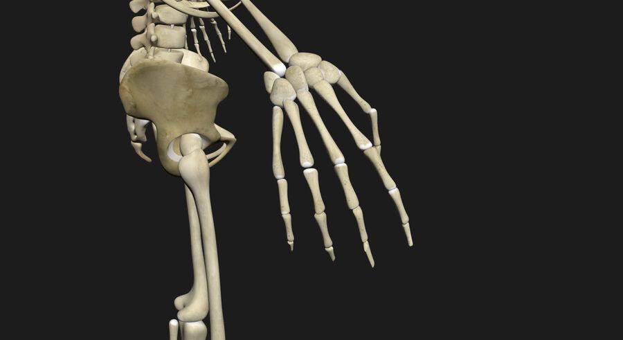 Man med skelett 3DSmax royalty-free 3d model - Preview no. 16