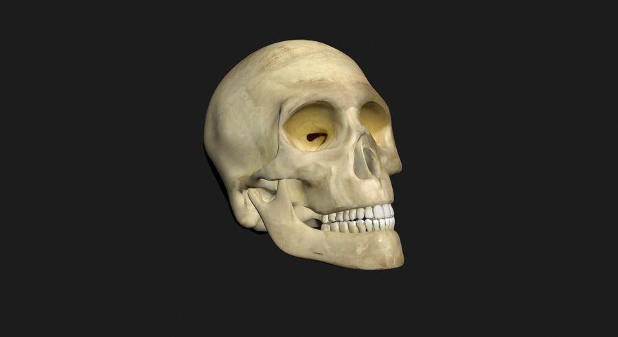 Man med skelett 3DSmax royalty-free 3d model - Preview no. 14