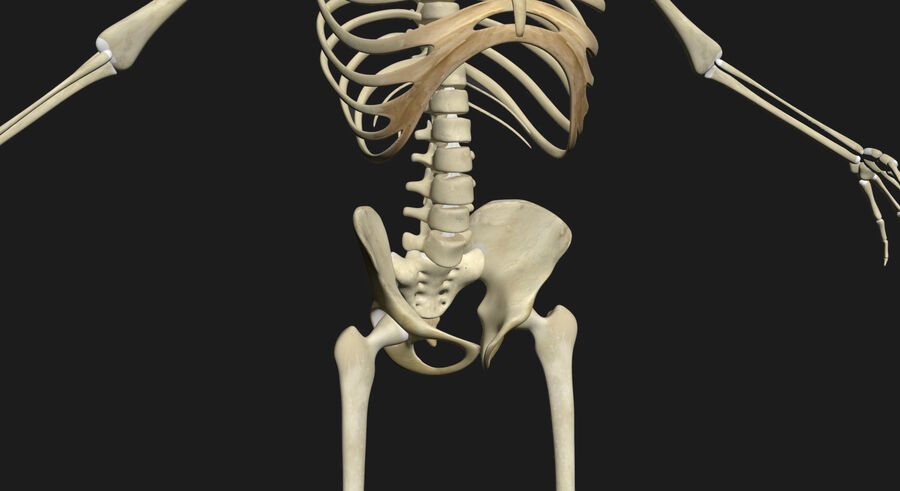 Man med skelett 3DSmax royalty-free 3d model - Preview no. 15
