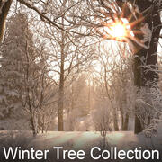 Winter Tree Collection 3d model