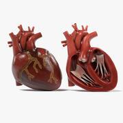 심장 및 섹션 3d model