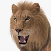 Pelliccia di leone 3d model