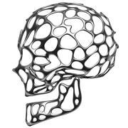 頭蓋骨 3d model