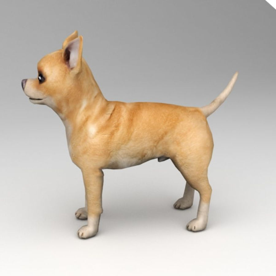 Chihuahua truqué royalty-free 3d model - Preview no. 4