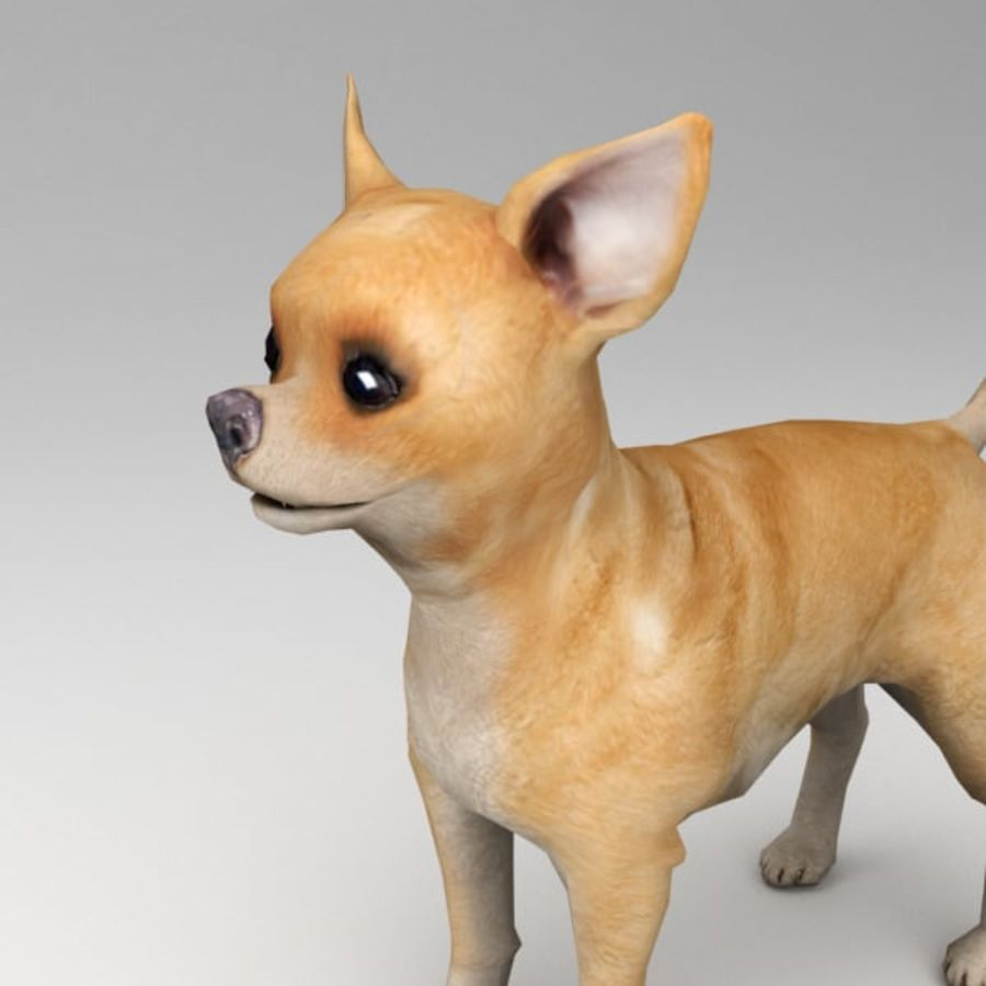 Chihuahua truqué royalty-free 3d model - Preview no. 5