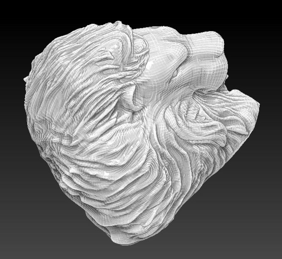 Lion head bust royalty-free 3d model - Preview no. 6
