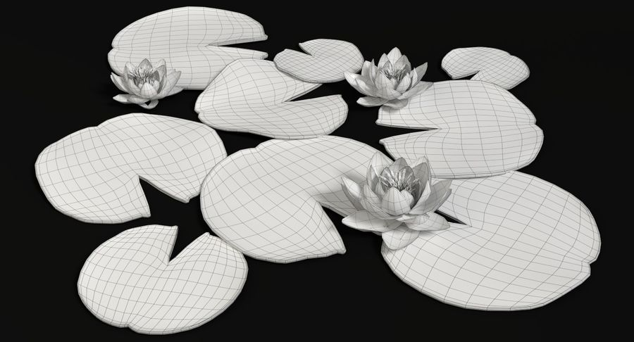 Seerose royalty-free 3d model - Preview no. 11
