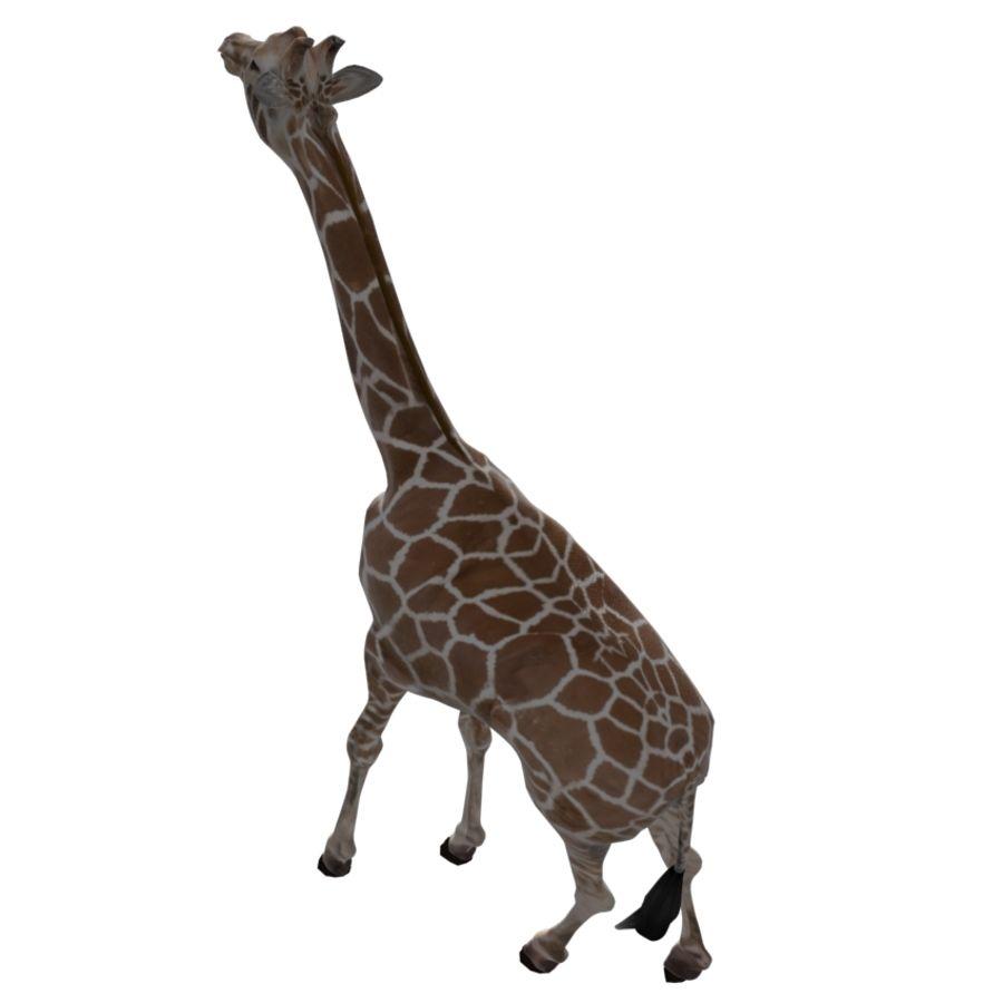 Giraffe royalty-free 3d model - Preview no. 4