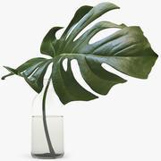 Monstera Leaves 005 3d model