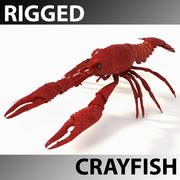 Crayfish Rigged 3d model