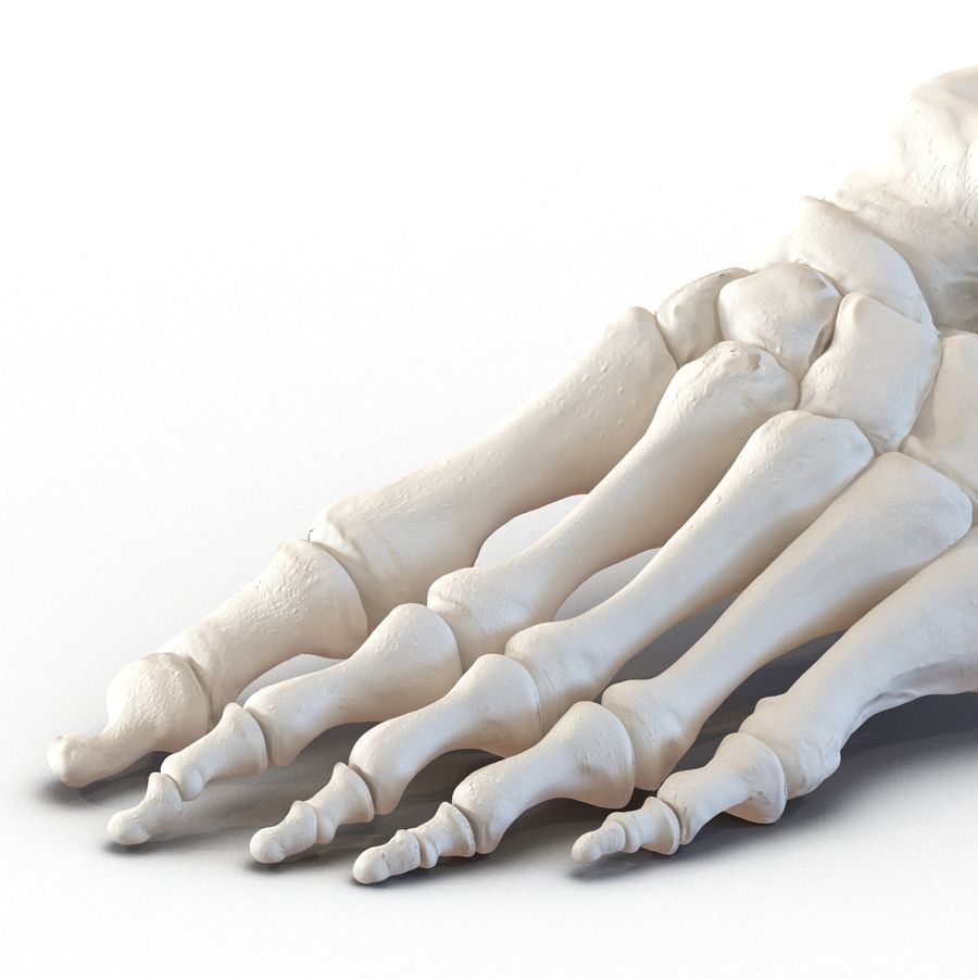 Human Foot Bones royalty-free 3d model - Preview no. 11