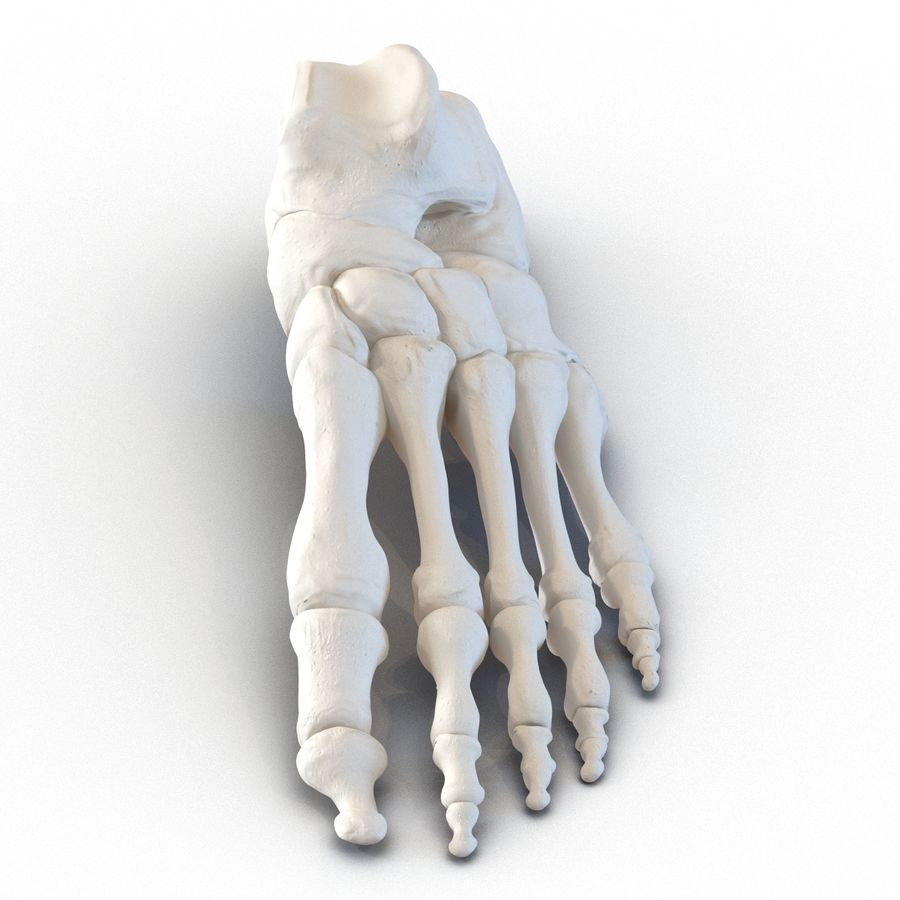 Human Foot Bones royalty-free 3d model - Preview no. 3