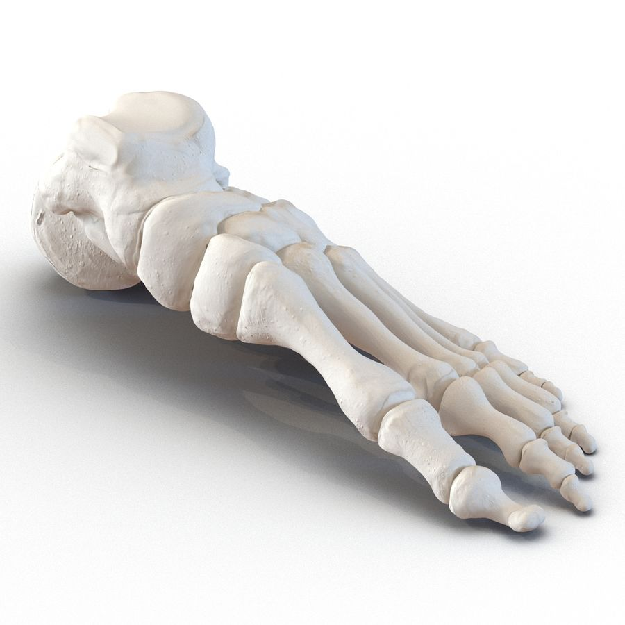 Human Foot Bones royalty-free 3d model - Preview no. 4