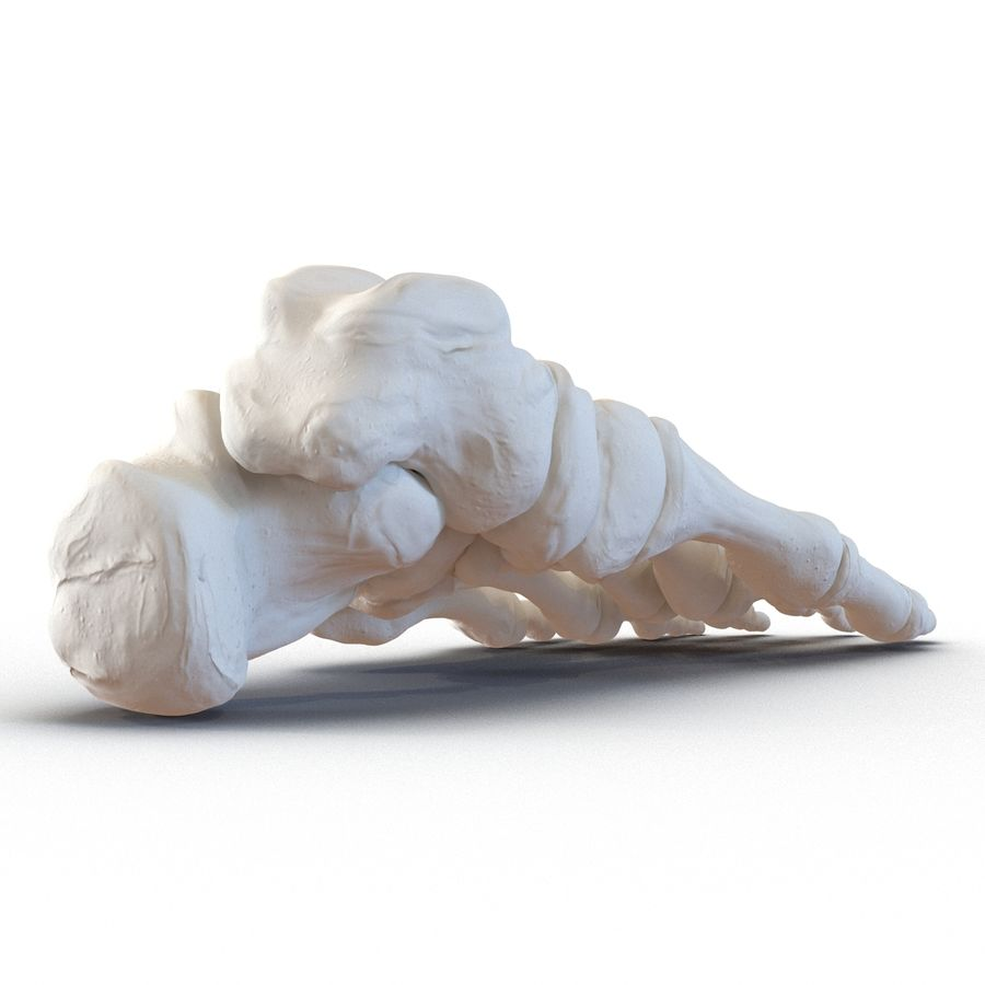 Human Foot Bones royalty-free 3d model - Preview no. 5
